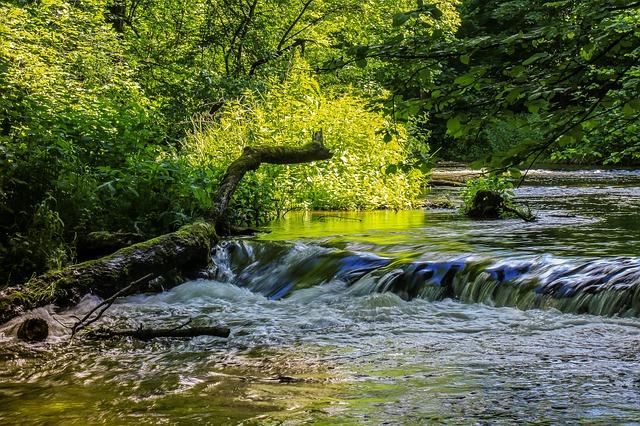strom v řece